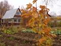 Как законсервировать и защитить дачу осенью