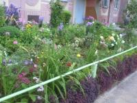 Итоги конкурса «Самый красивый двор» Ижевска
